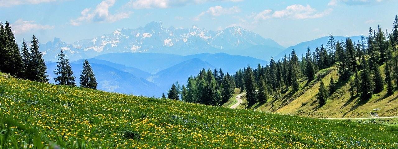 travnik, gozd, gore